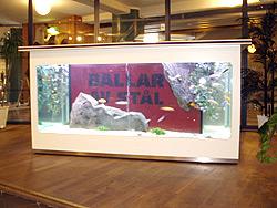Barakvarium i ståhöjd. Exponera ditt budskap eller varumärke i akvariet med 360 graders betraktningsvinkel.