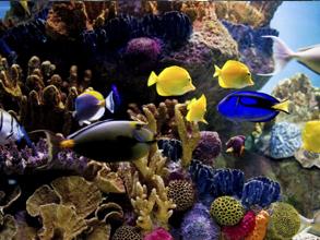 Är ett saltvattensakvarium med clownfisk, kirurgfisk och muräna bland koraller och havsanemoner.